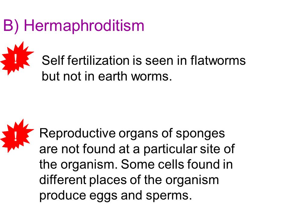 B) Hermaphroditism Reproductive organs of sponges are not found at a particular site of the organism. Some cells found in different places of the orga