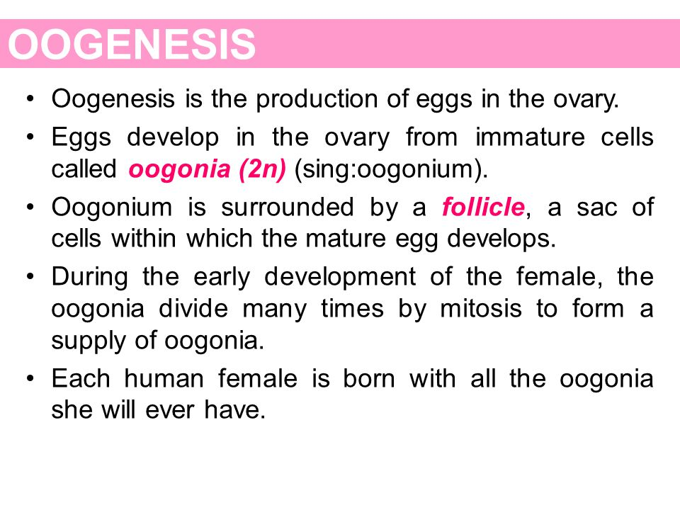 OOGENESIS Oogenesis is the production of eggs in the ovary. Eggs develop in the ovary from immature cells called oogonia (2n) (sing:oogonium). Oogoniu