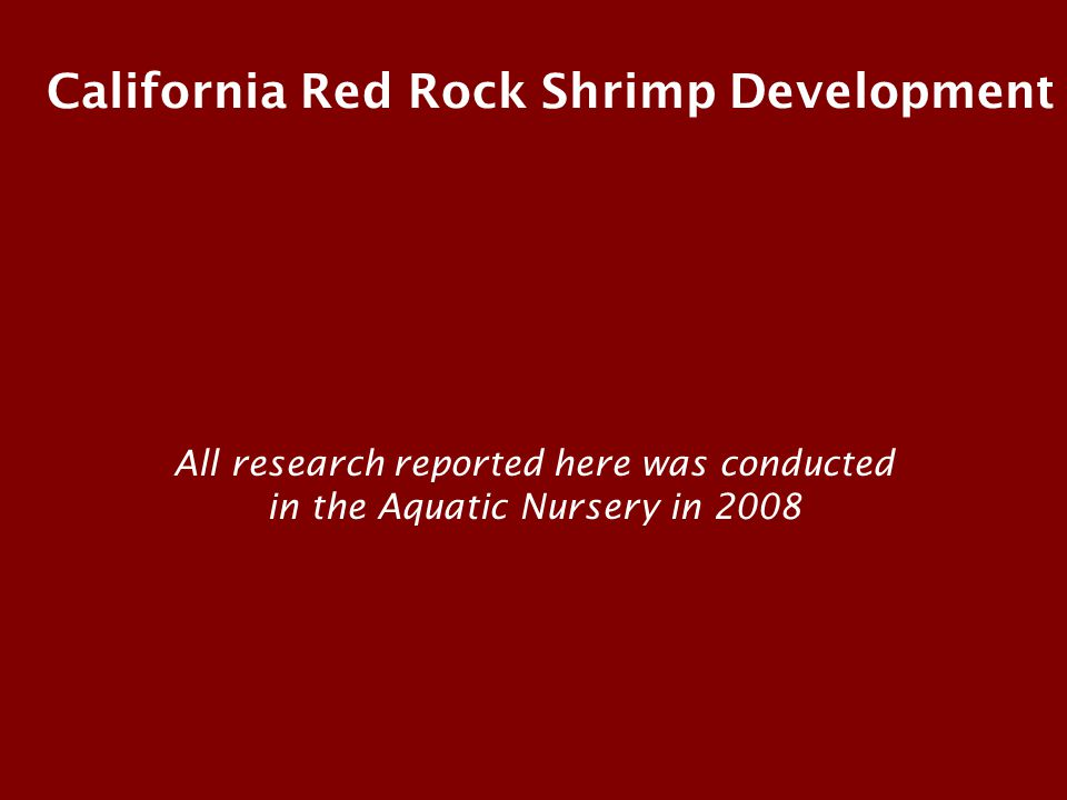 California Red Rock Shrimp Development All research reported here was conducted in the Aquatic Nursery in 2008