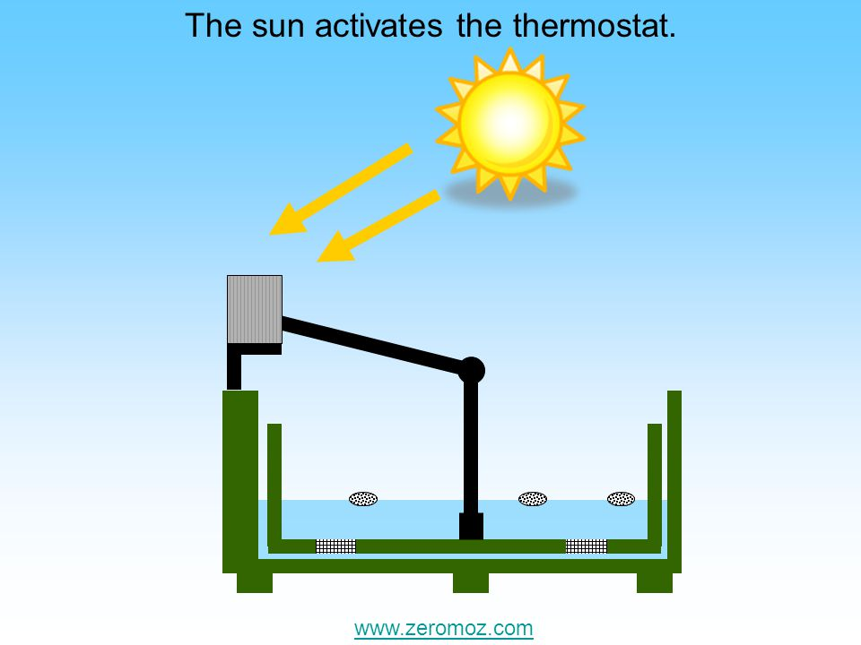 The sun causes the breeding chamber to rise. www.zeromoz.com