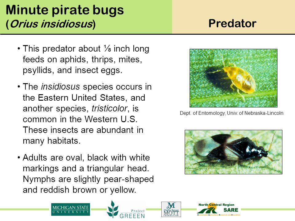 Dept.of Entomology, Univ.