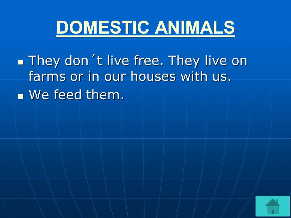 DOMESTIC ANIMALS WILD ANIMALSANIMALS