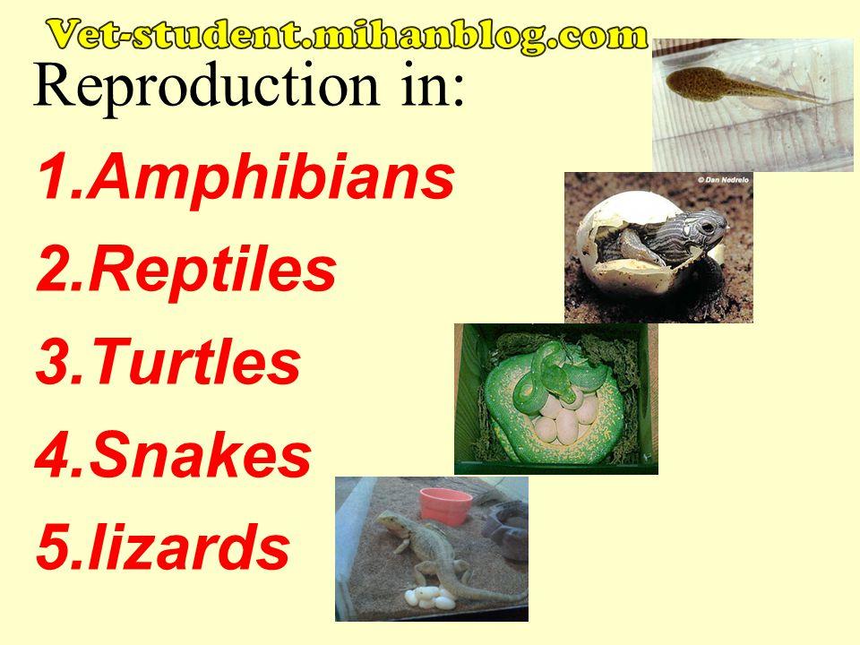 Reproduction in: 1.Amphibians 2.Reptiles 3.Turtles 4.Snakes 5.lizards vet-student.mihanblog.com