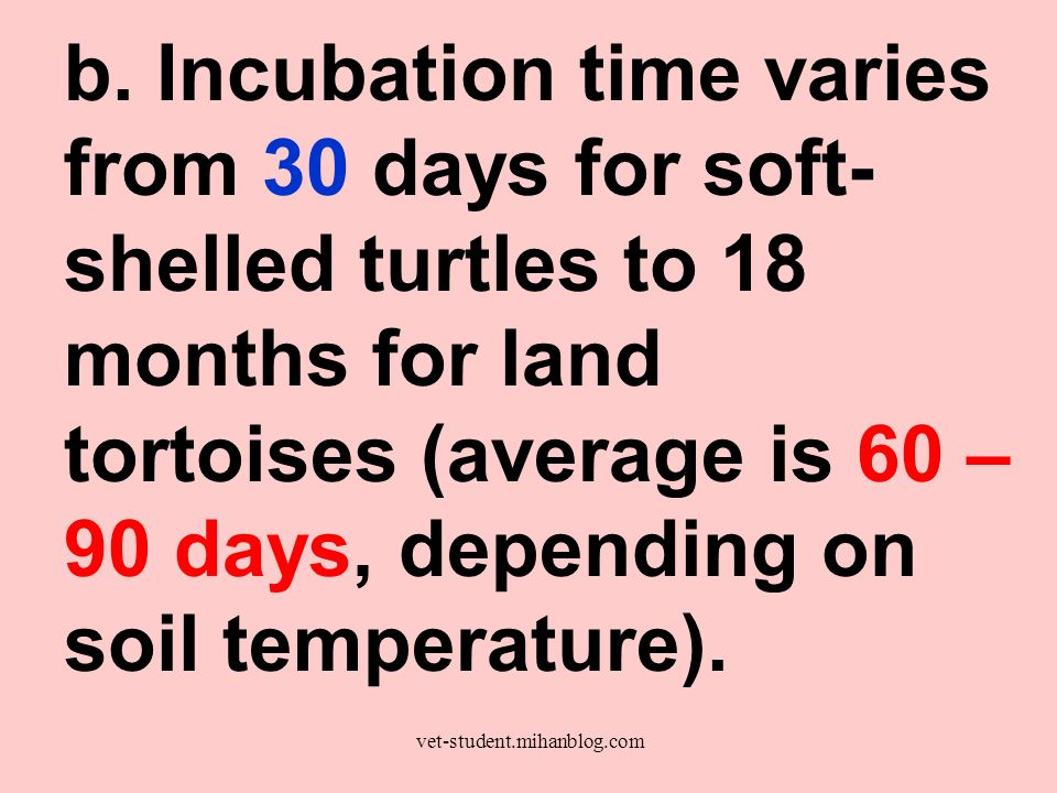 b. Incubation time varies from 30 days for soft- shelled turtles to 18 months for land tortoises (average is 60 – 90 days, depending on soil temperatu