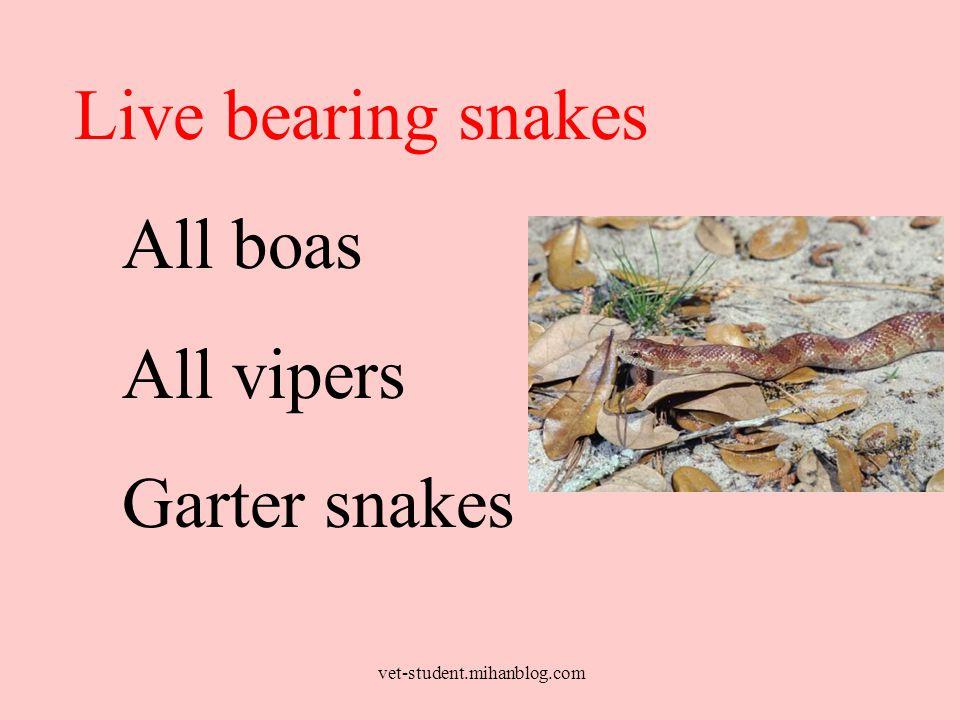 Live bearing snakes All boas All vipers Garter snakes vet-student.mihanblog.com