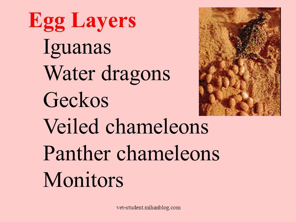 Egg Layers Iguanas Water dragons Geckos Veiled chameleons Panther chameleons Monitors vet-student.mihanblog.com