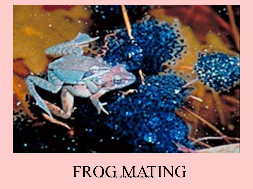Anurans = mating season for amphibians Rainfall can induce mating.