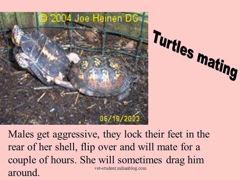 Turtles are oviparous.nest a.