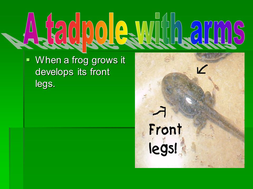When a frog grows it develops its front legs. When a frog grows it develops its front legs.