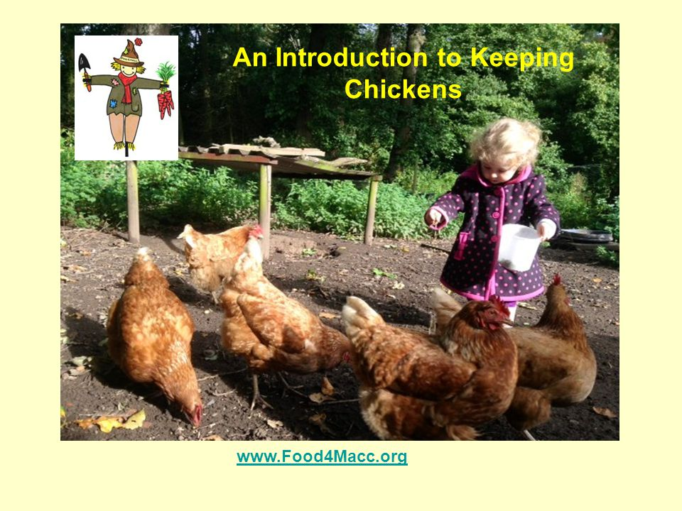 An Introduction to Keeping Chickens www.Food4Macc.org
