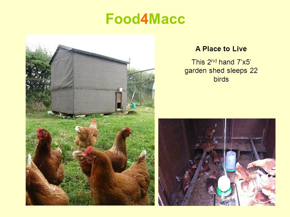 A Place to Live This 2 nd hand 7x5 garden shed sleeps 22 birds