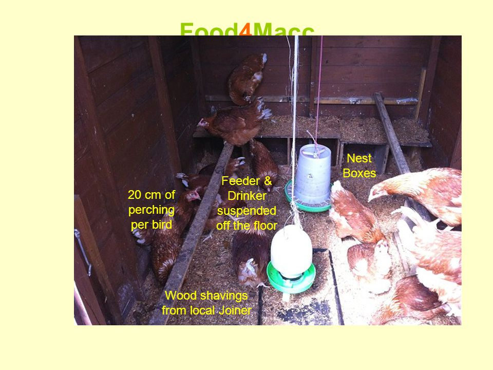 Food4Macc A Place to Live This 2 nd hand 7x5 garden shed sleeps 22 birds 20 cm of perching per bird Feeder & Drinker suspended off the floor Nest Boxes Wood shavings from local Joiner