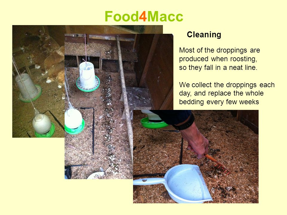 Food4Macc Cleaning Most of the droppings are produced when roosting, so they fall in a neat line.