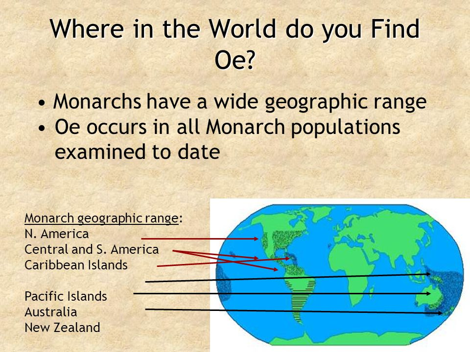 Where in the World do you Find Oe? Monarchs have a wide geographic range Oe occurs in all Monarch populations examined to date Monarch geographic rang