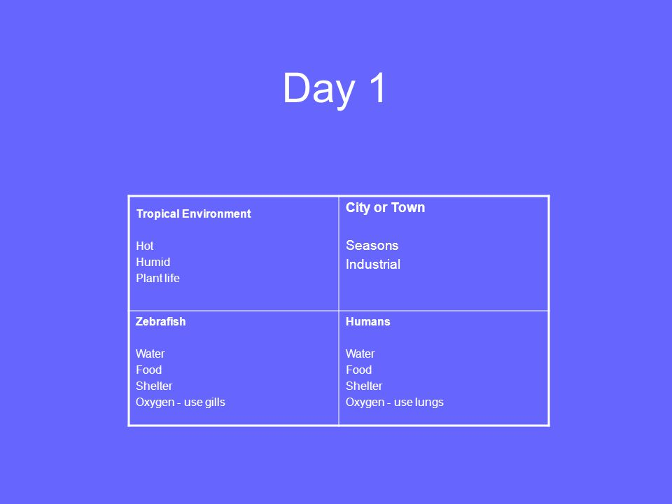 Day 1 Tropical Environment Hot Humid Plant life City or Town Seasons Industrial Zebrafish Water Food Shelter Oxygen - use gills Humans Water Food Shel