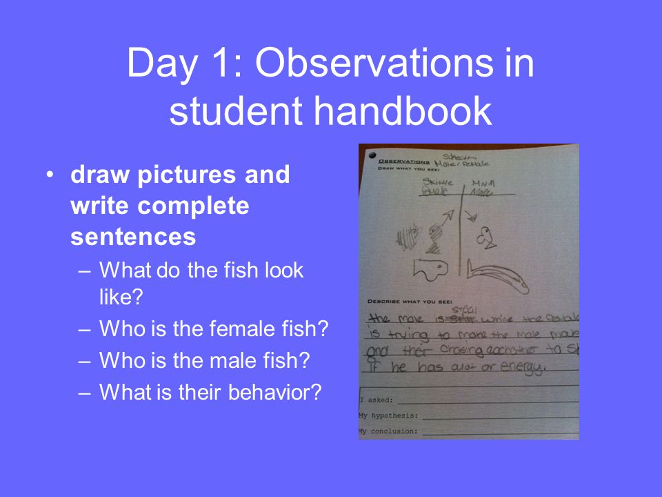 Day 1: Observations in student handbook draw pictures and write complete sentences –What do the fish look like? –Who is the female fish? –Who is the m