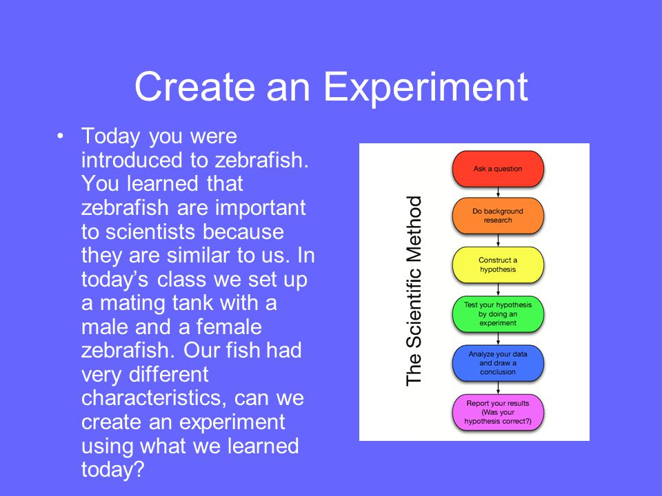 Create an Experiment Today you were introduced to zebrafish. You learned that zebrafish are important to scientists because they are similar to us. In