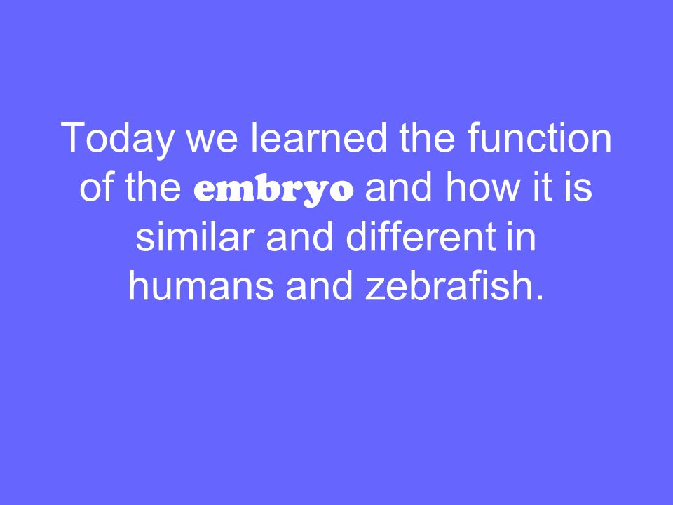 Today we learned the function of the embryo and how it is similar and different in humans and zebrafish.