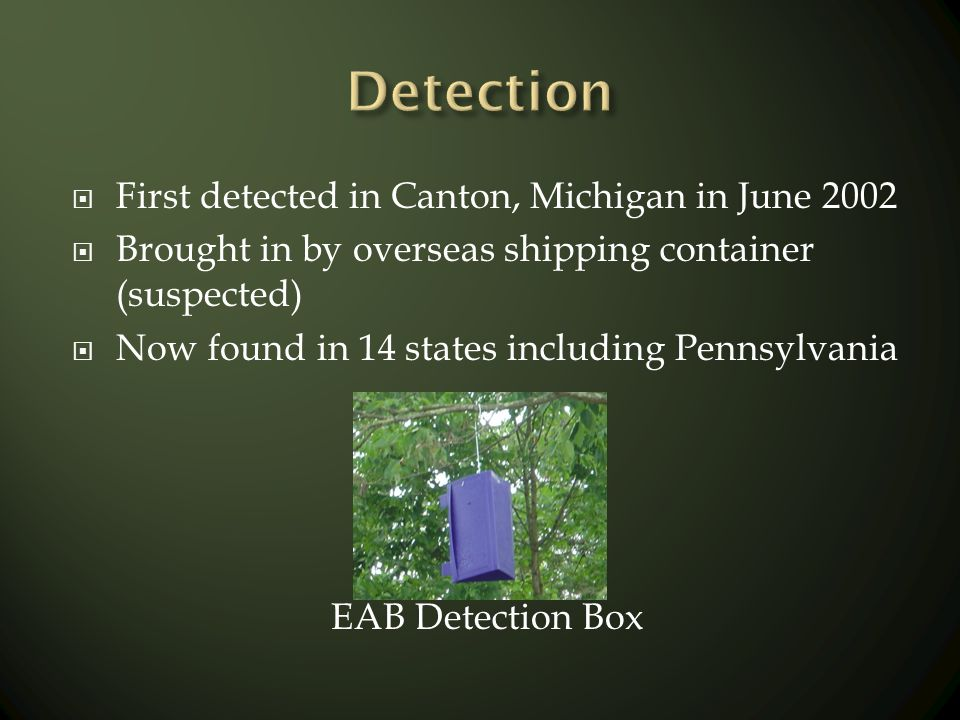 First detected in Canton, Michigan in June 2002 Brought in by overseas shipping container (suspected) Now found in 14 states including Pennsylvania EA