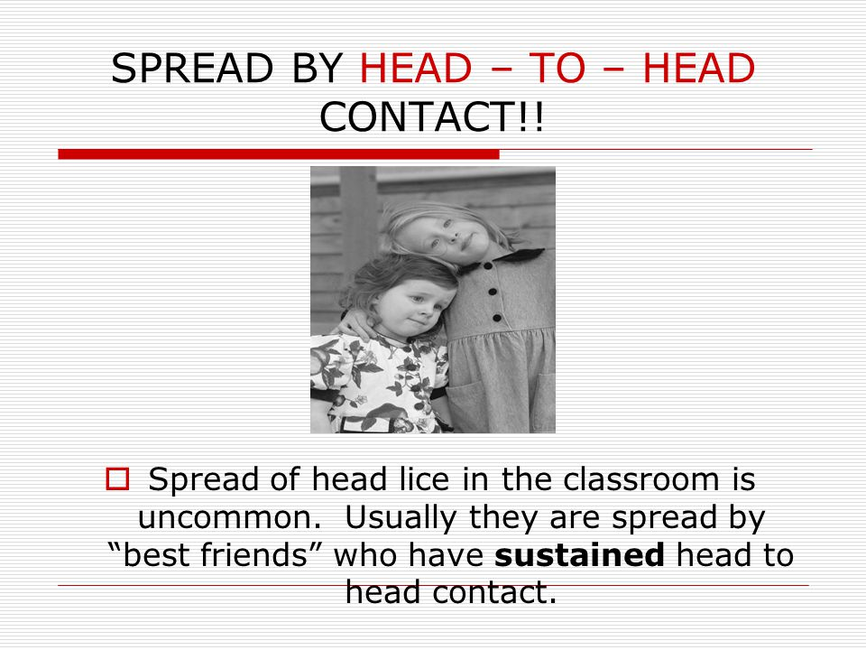 SPREAD BY HEAD – TO – HEAD CONTACT!.Spread of head lice in the classroom is uncommon.