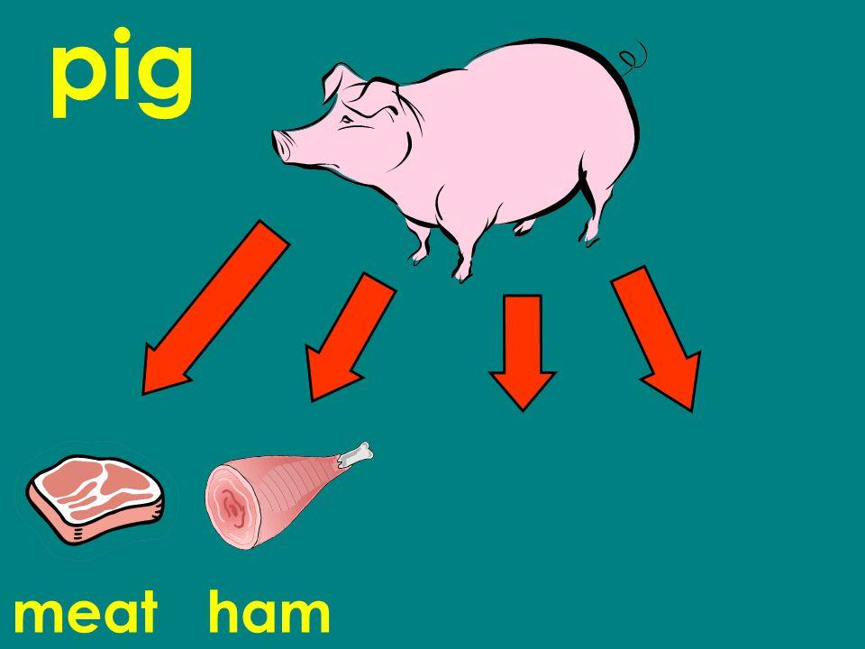 pig meat ham chorizo sausage