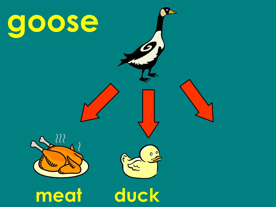 goose meatduck