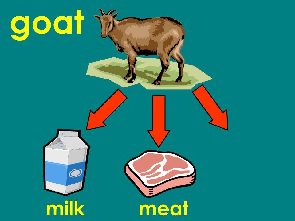 goat milkmeat
