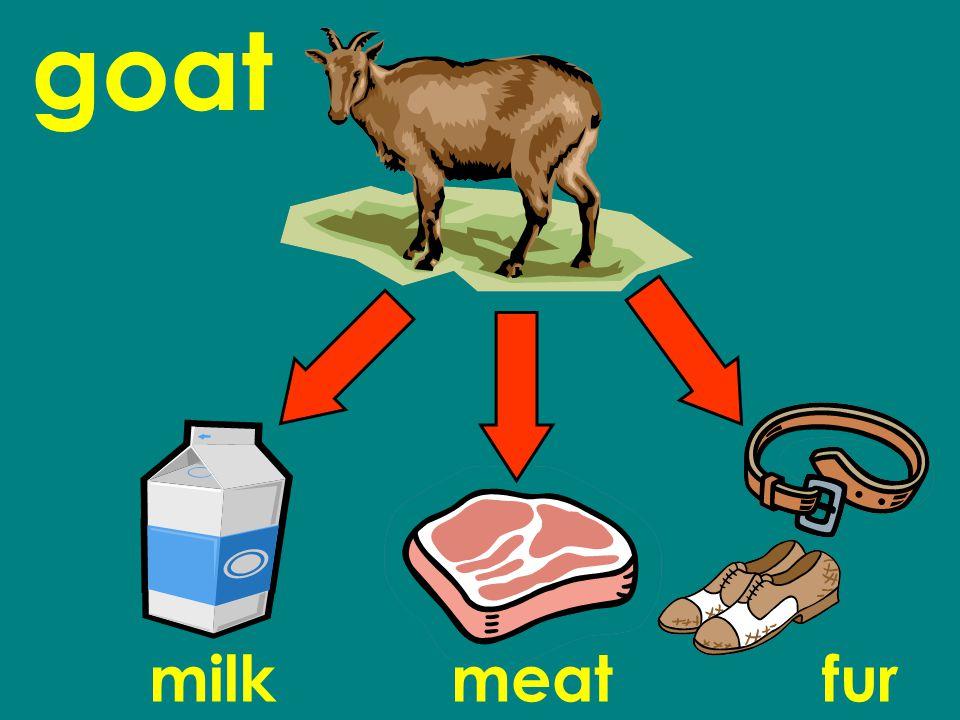goat milkmeatfur