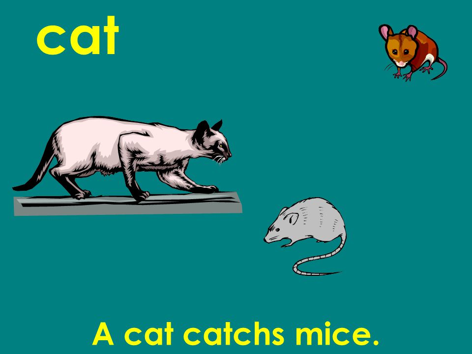 cat A cat catchs mice.