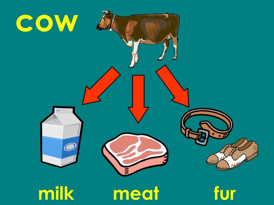 cow milkmeatfur