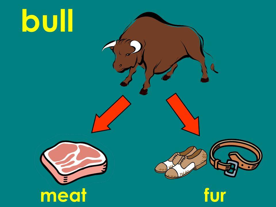 bull meatfur
