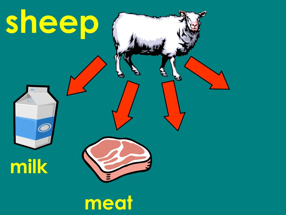 sheep milk meat