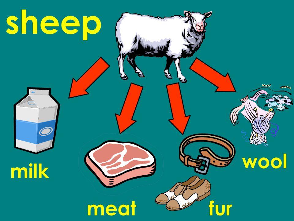 sheep milk meatfur wool