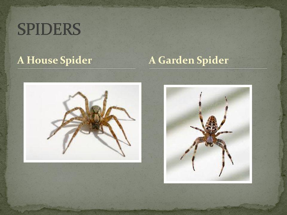 A House SpiderA Garden Spider