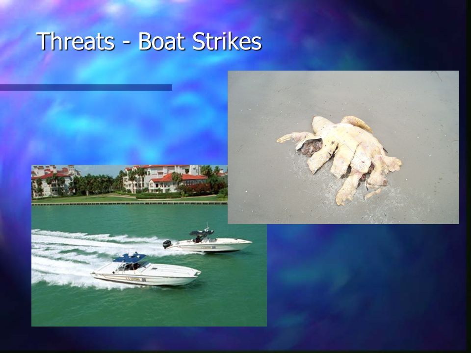 Threats - Boat Strikes