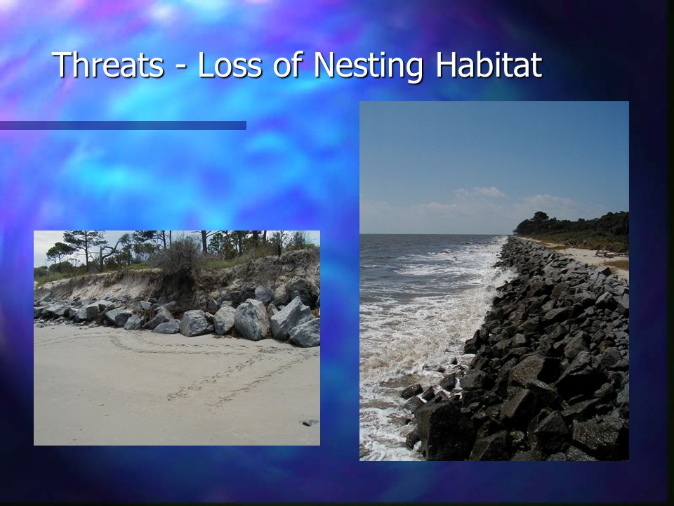 Threats - Loss of Nesting Habitat