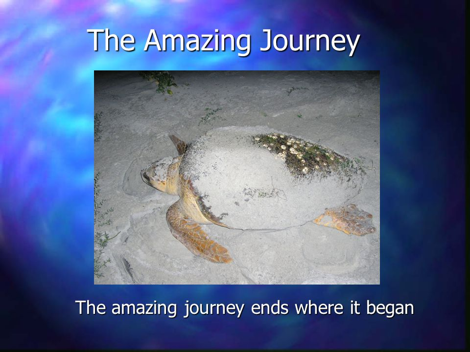 The Amazing Journey The amazing journey ends where it began