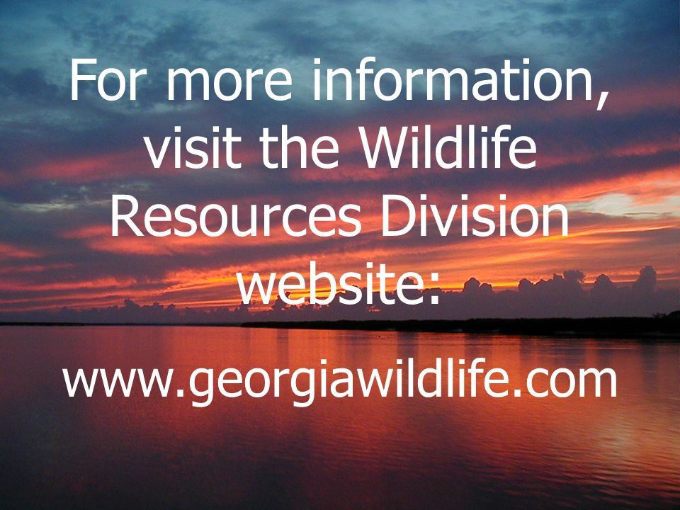For more information, visit the Wildlife Resources Division website: