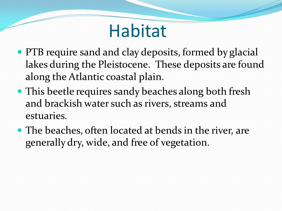 Habitat PTB require sand and clay deposits, formed by glacial lakes during the Pleistocene.