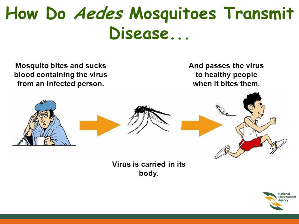 How Do Aedes Mosquitoes Transmit Disease...