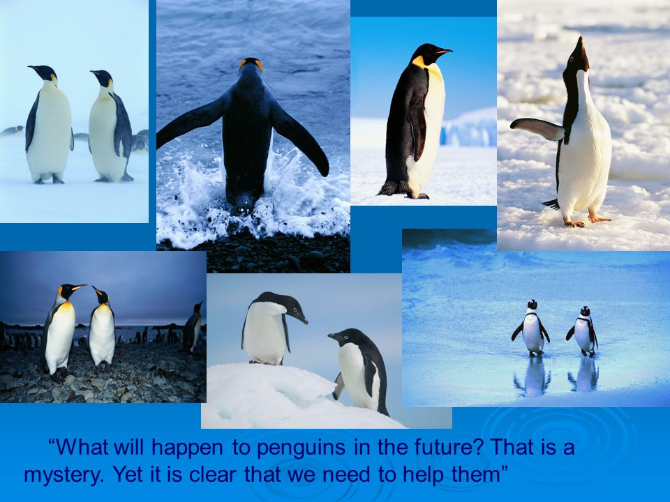 What will happen to penguins in the future? That is a mystery. Yet it is clear that we need to help them