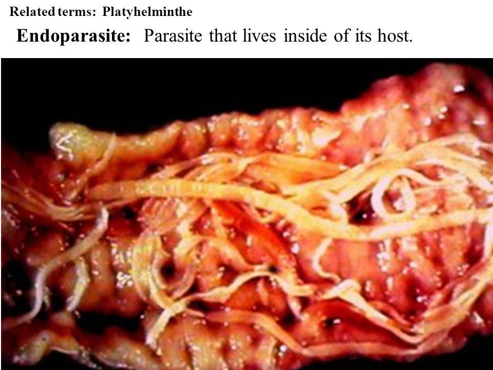 Roundworms Phylum: Nematoda