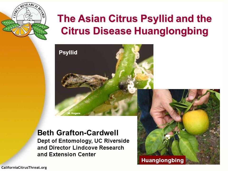 The Asian Citrus Psyllid and the Citrus Disease Huanglongbing Psyllid Huanglongbing M. Rogers Beth Grafton-Cardwell Dept of Entomology, UC Riverside a
