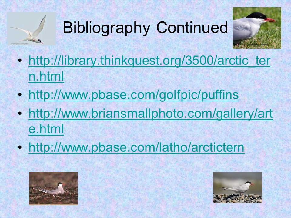 Bibliography Continued http://library.thinkquest.org/3500/arctic_ter n.htmlhttp://library.thinkquest.org/3500/arctic_ter n.html http://www.pbase.com/golfpic/puffins http://www.briansmallphoto.com/gallery/art e.htmlhttp://www.briansmallphoto.com/gallery/art e.html http://www.pbase.com/latho/arctictern