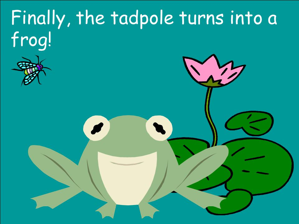 Over the next few weeks, the tadpole starts looking more like a frog.