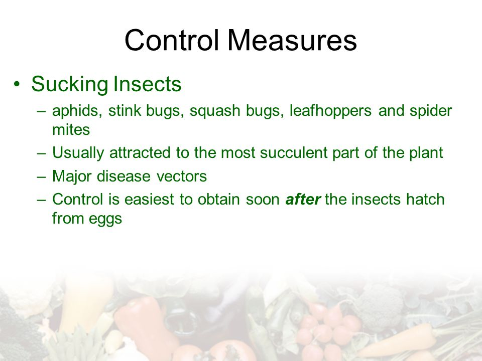 Control Measures Sucking Insects –aphids, stink bugs, squash bugs, leafhoppers and spider mites –Usually attracted to the most succulent part of the p