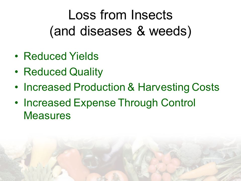 Loss from Insects (and diseases & weeds) Reduced Yields Reduced Quality Increased Production & Harvesting Costs Increased Expense Through Control Meas