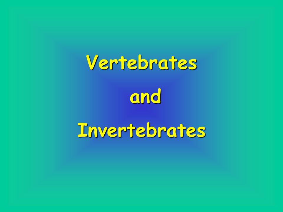 Vertebrates and andInvertebrates