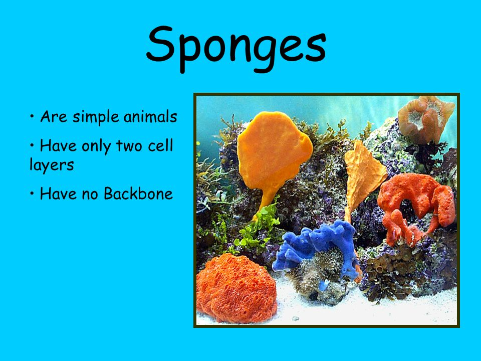 There are many different types of Invertebrates: Sponges Anemones and Jellyfish Worms Snails, Clams and Octopuses Starfish and Urchins Insects, Spider