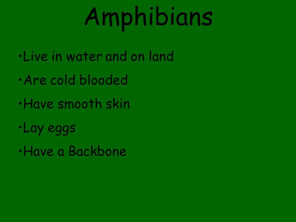 Reptiles have Backbones